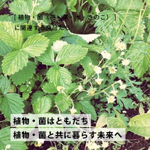 赤ちゃん・こどもを育む、お買い物:植物・菌(花・草・木・きのこ)を学ぶ・楽しむの商品一覧
