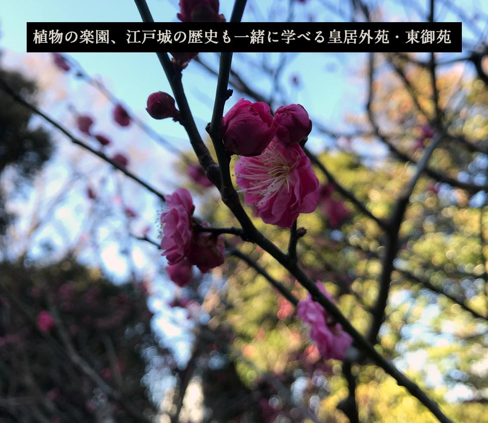 【国民公園】都心にある植物の楽園、江戸城の歴史も一緒に学べる皇居外苑・東御苑