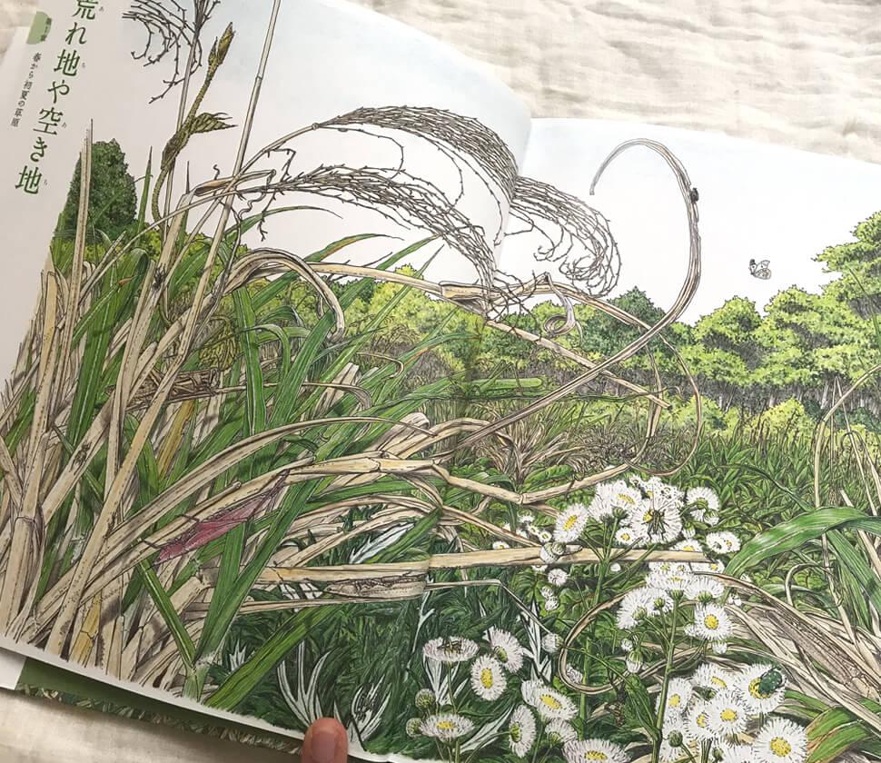 野山の鳴く虫図鑑
