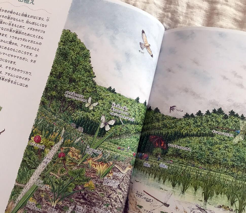 田んぼの1年(里山の自然)